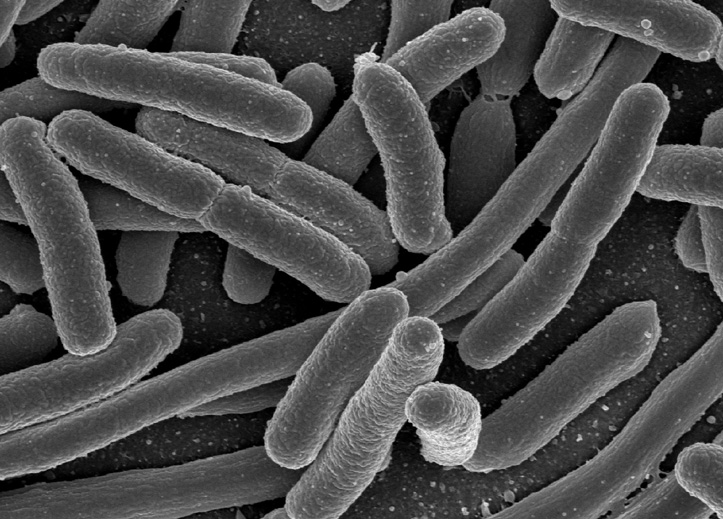 Between germs and disease from airborne bacteria, or microbes