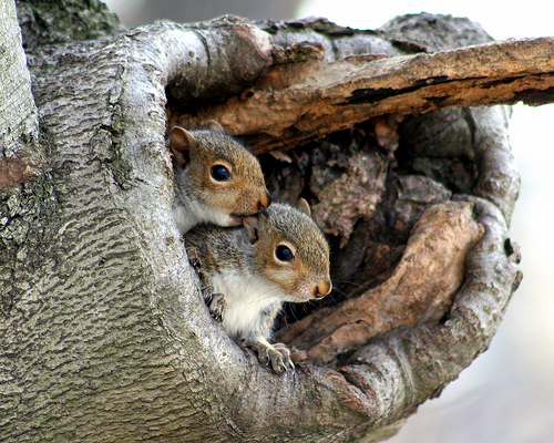 Terrific American Pest Control Inc Squirrels Beutiful Home Inspiration Ommitmahrainfo